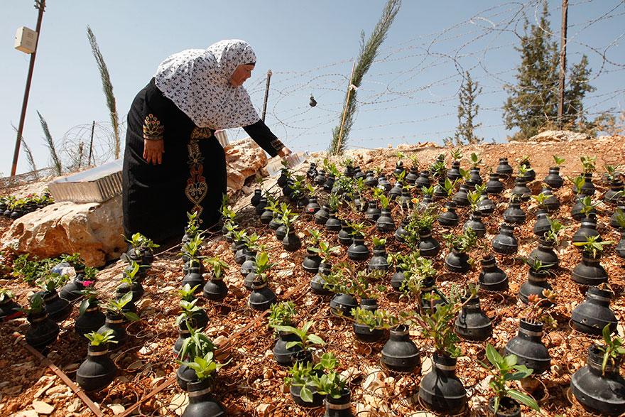 Tear Gas Flower Pots In Palestine (2)
