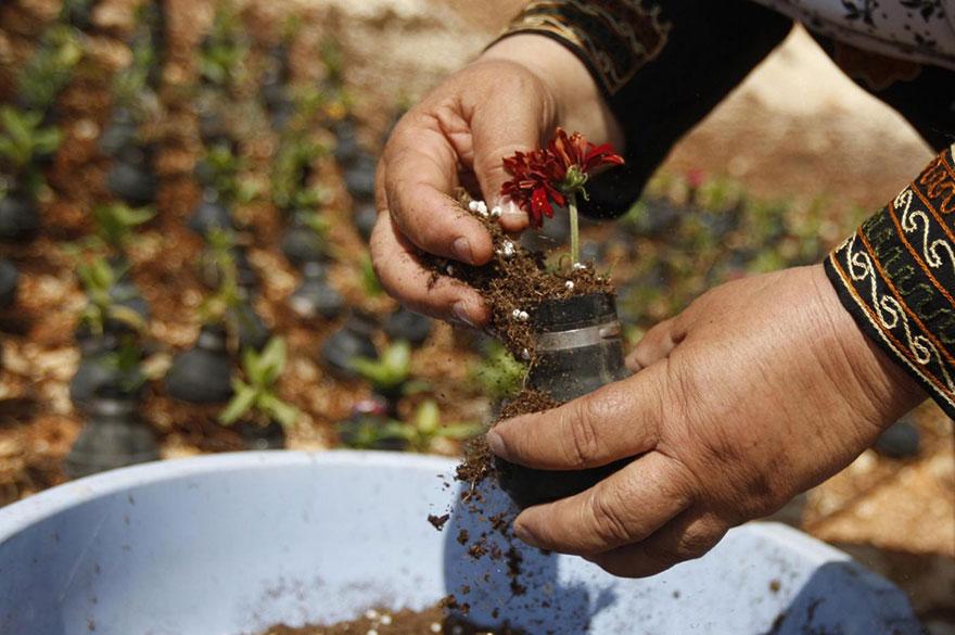 Tear Gas Flower Pots In Palestine (3)