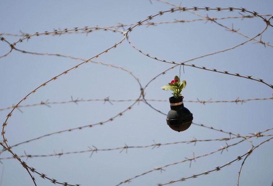 Tear Gas Flower Pots In Palestine (4)