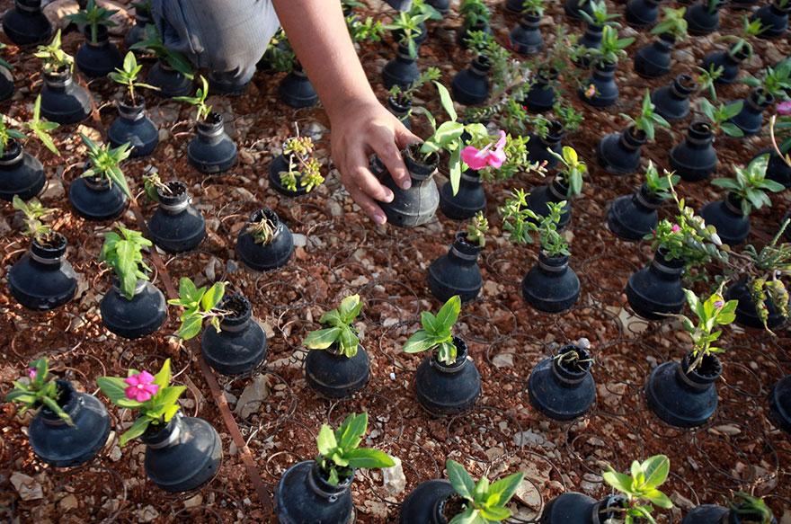 Tear Gas Flower Pots In Palestine (7)