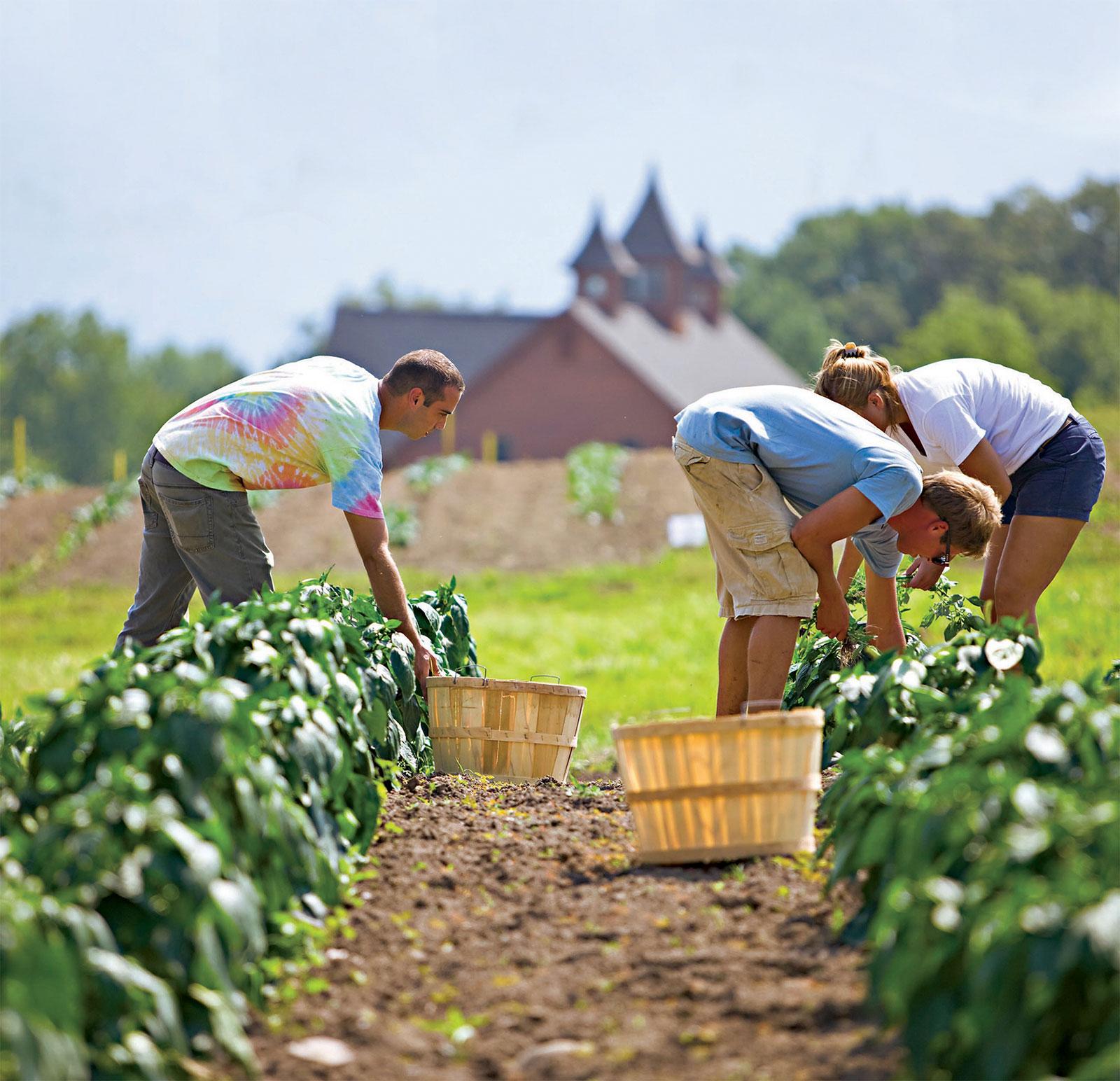 Work On An Organic Farm