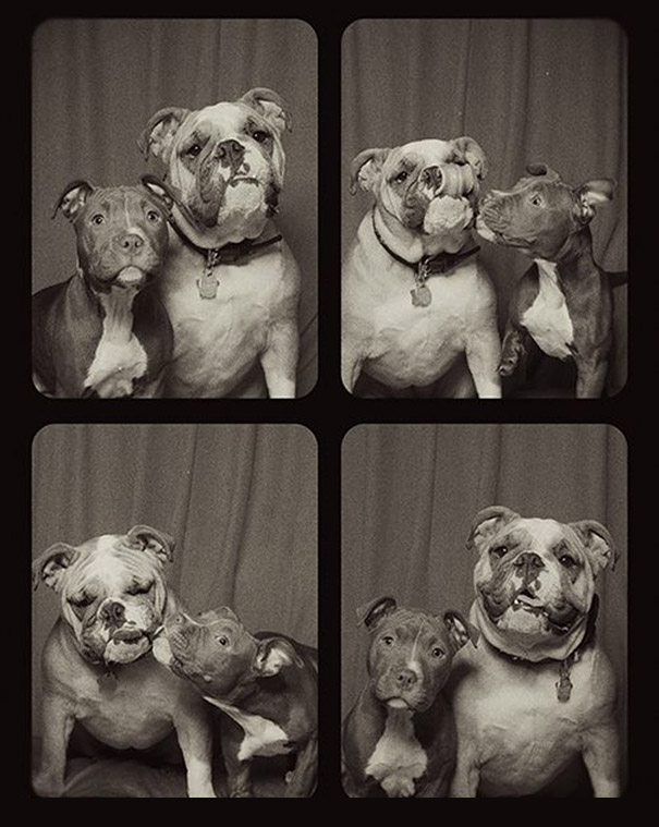 Dogs In A Photo Booth (1)