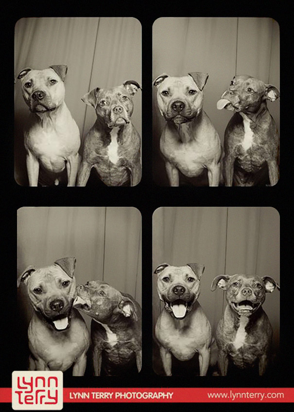 Dogs In A Photo Booth (2)