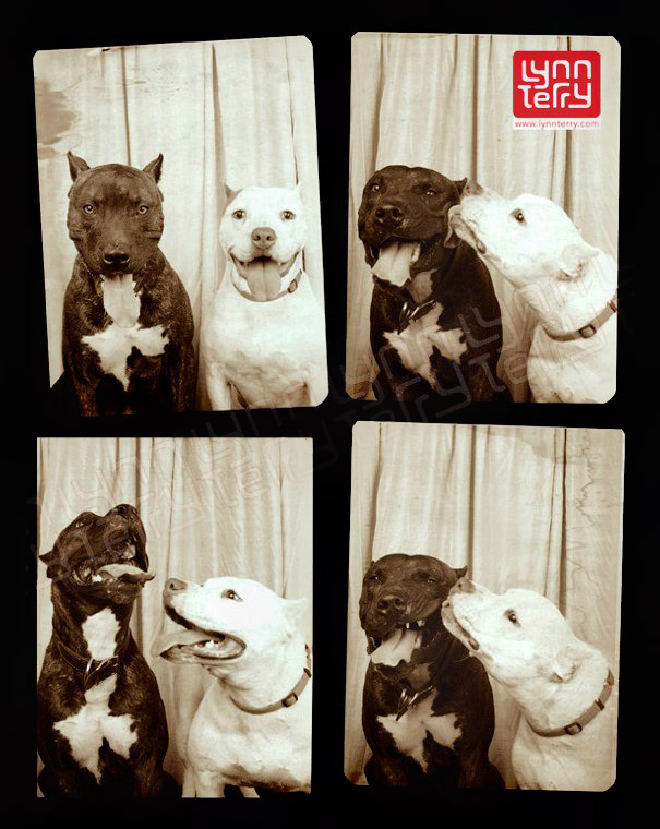 Dogs In A Photo Booth (3)