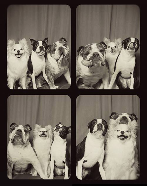 Dogs In A Photo Booth (4)