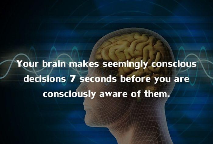 Human Body Fact (1)