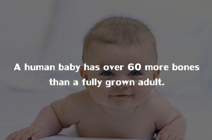 Human Body Fact (10)