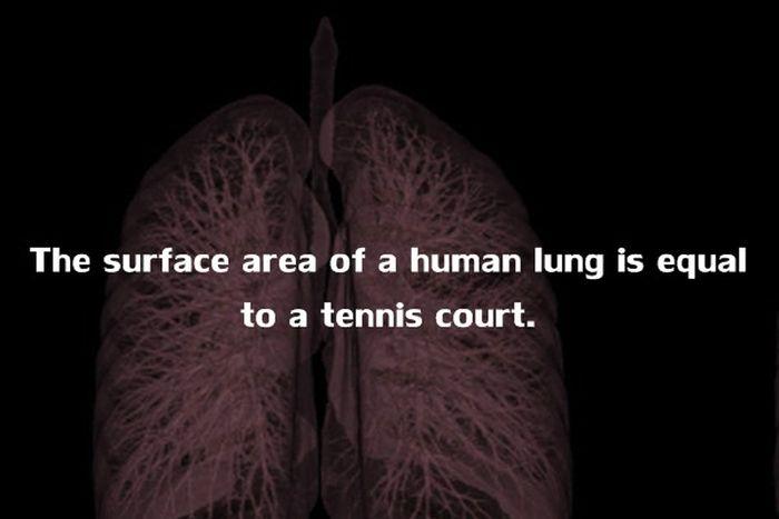 Human Body Fact (11)