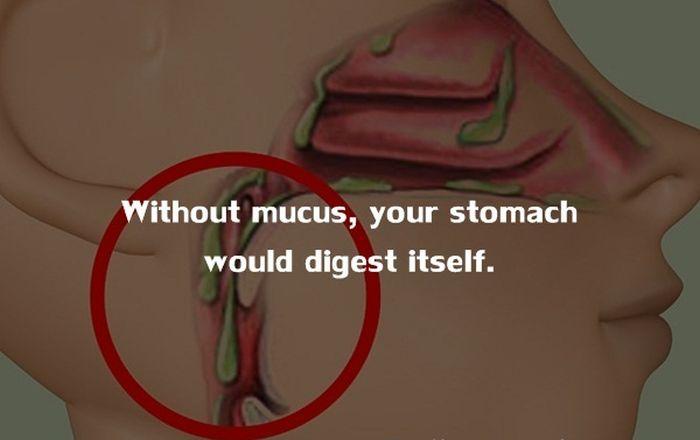 Human Body Fact (13)