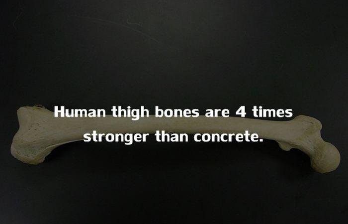 Human Body Fact (14)