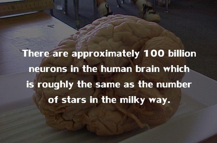 Human Body Fact (19)