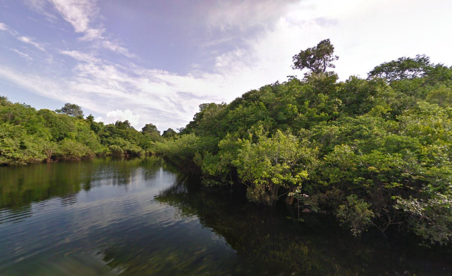 Amazon Rainforest Google Street View
