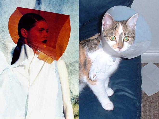 Cat Model (13)