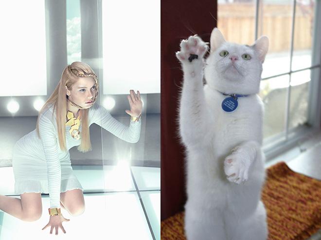 Cat Model (16)