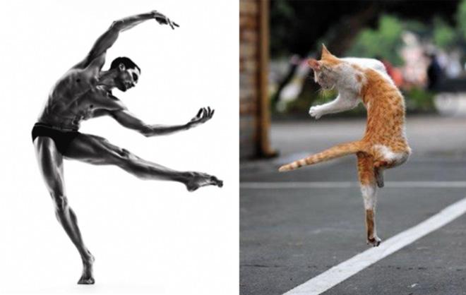 Cat Model (9)