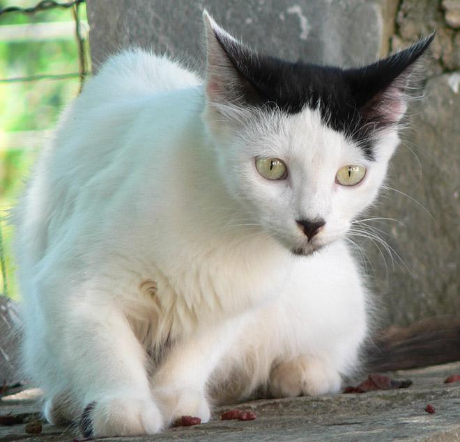 Cat That Looks Like Hitler (13)