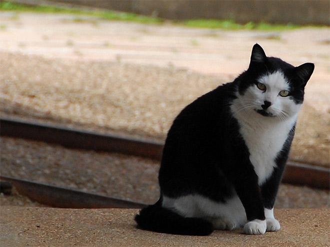 Cat That Looks Like Hitler (17)