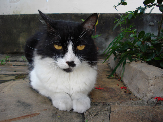 Cat That Looks Like Hitler (18)