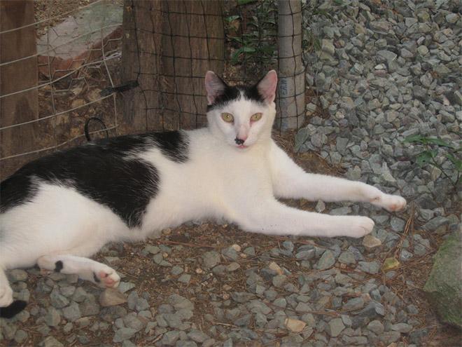 Cat That Looks Like Hitler (19)