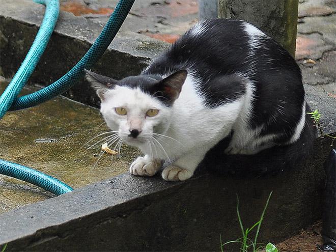 Cat That Looks Like Hitler (2)