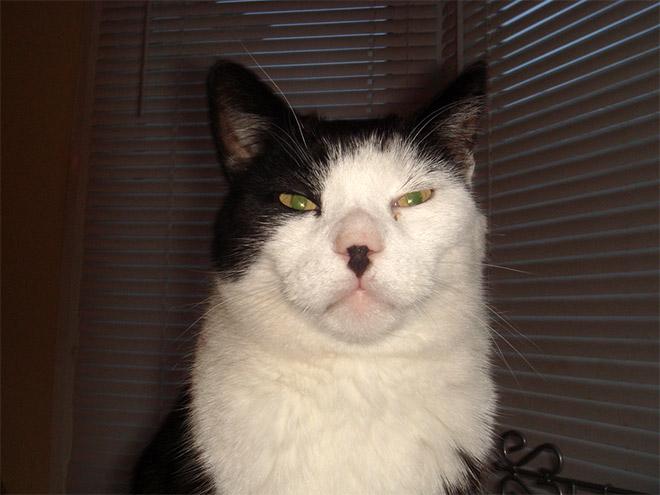 Cat That Looks Like Hitler (20)