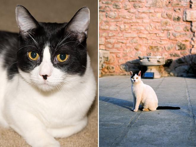 Cat That Looks Like Hitler (4)