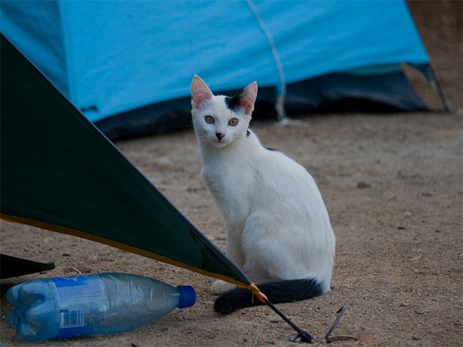 Cat That Looks Like Hitler (6)
