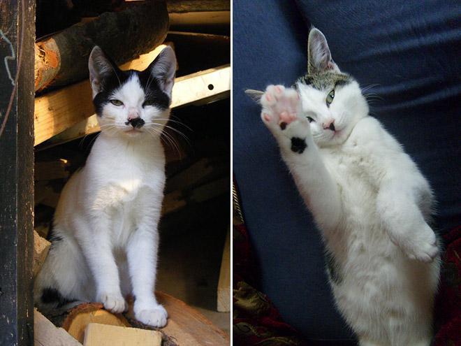 Cat That Looks Like Hitler (8)