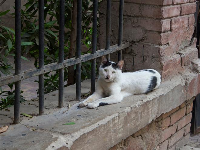 Cat That Looks Like Hitler (9)