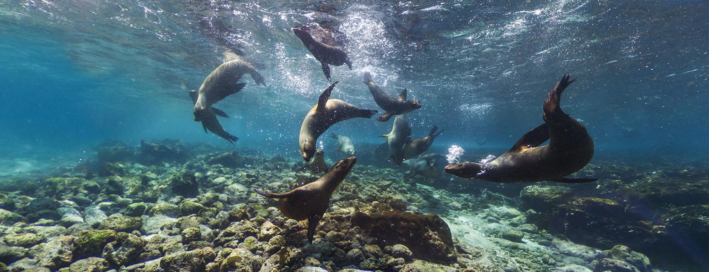 Galapagos Islands Google Street View