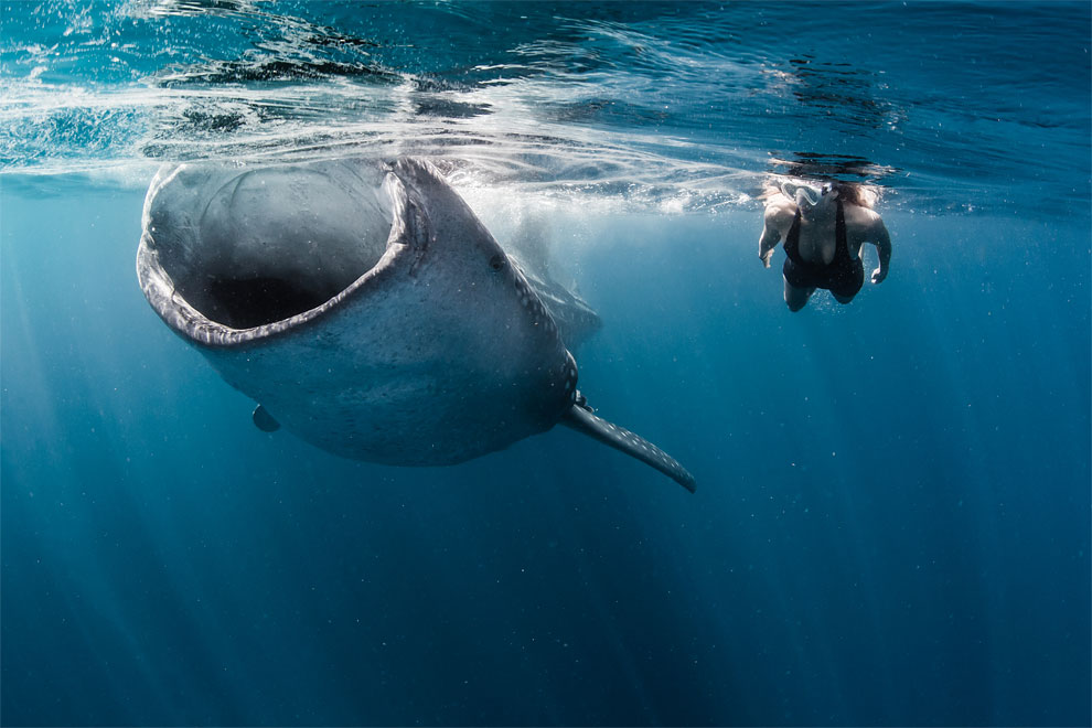 Models Swim and Pose with Whale Sharks (11)