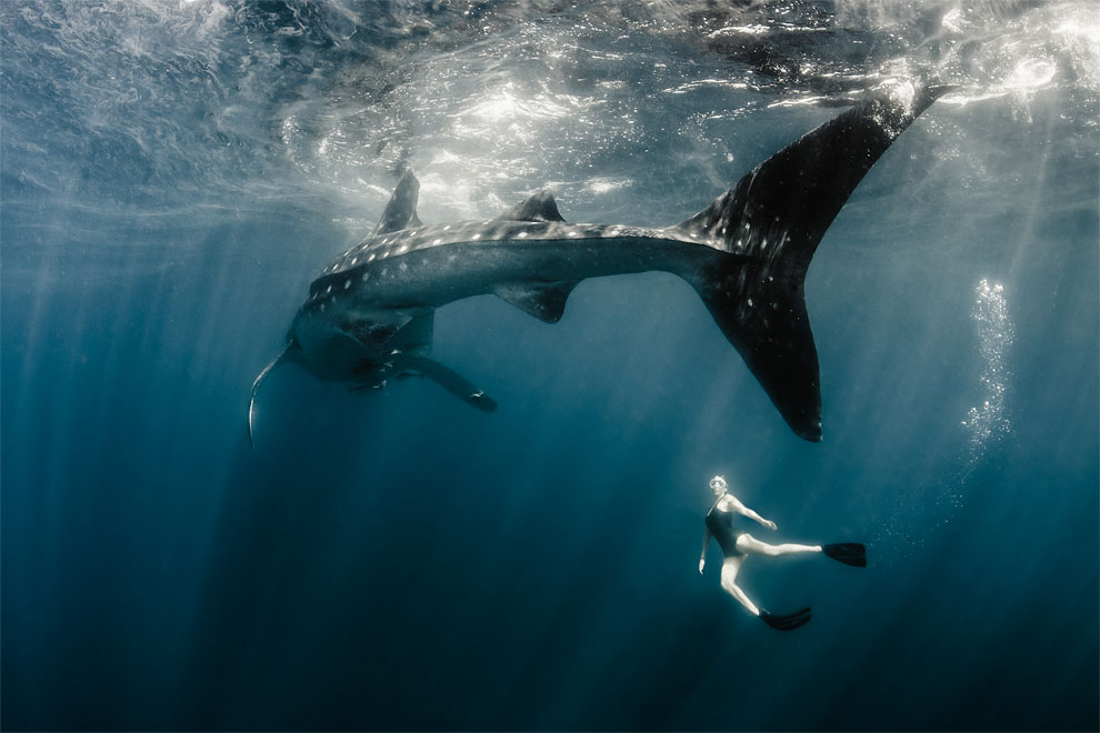 Models Swim and Pose with Whale Sharks (14)