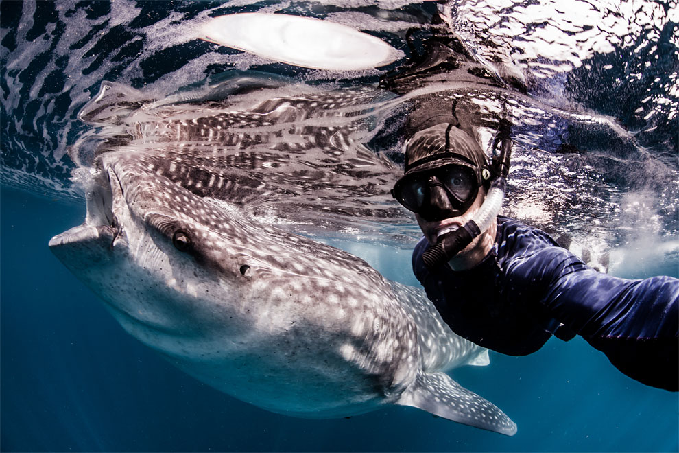 Models Swim and Pose with Whale Sharks (18)