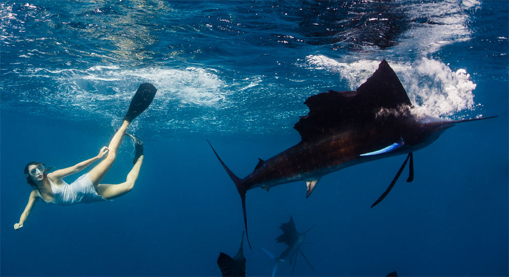 Models Swim and Pose with Whale Sharks (19)