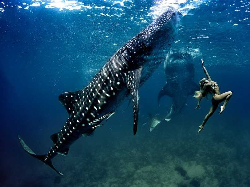 Models Swim and Pose with Whale Sharks (20)