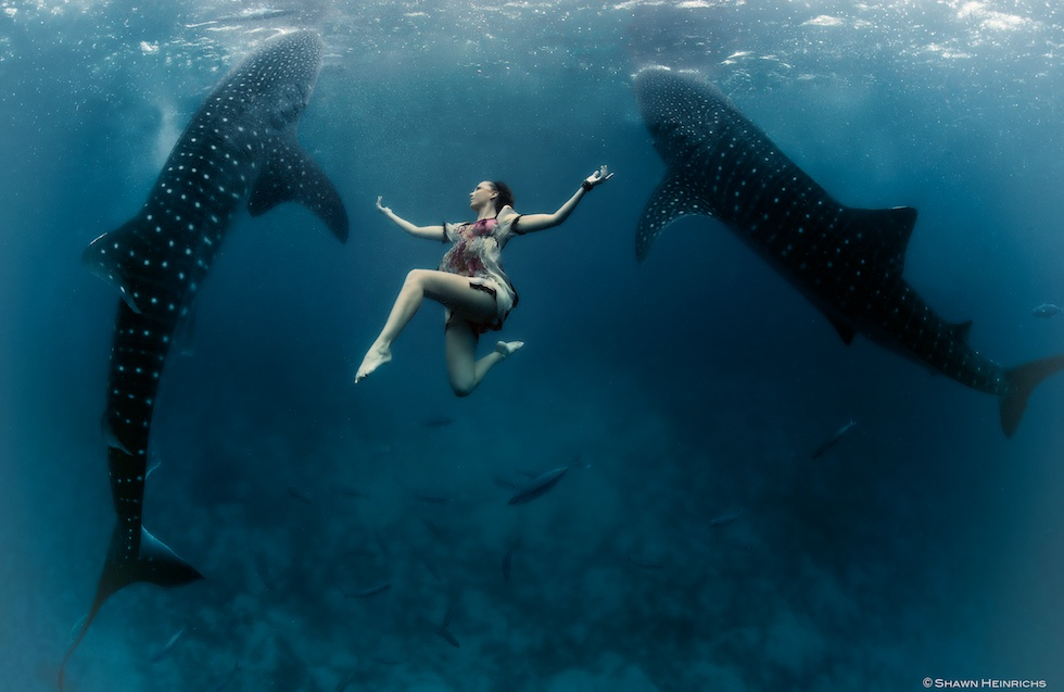 Models Swim and Pose with Whale Sharks (21)