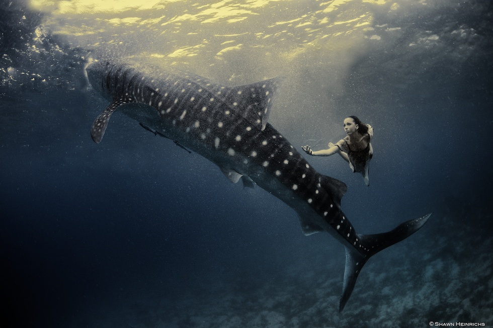 Models Swim and Pose with Whale Sharks (22)
