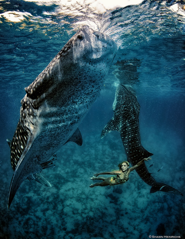 Models Swim and Pose with Whale Sharks (23)