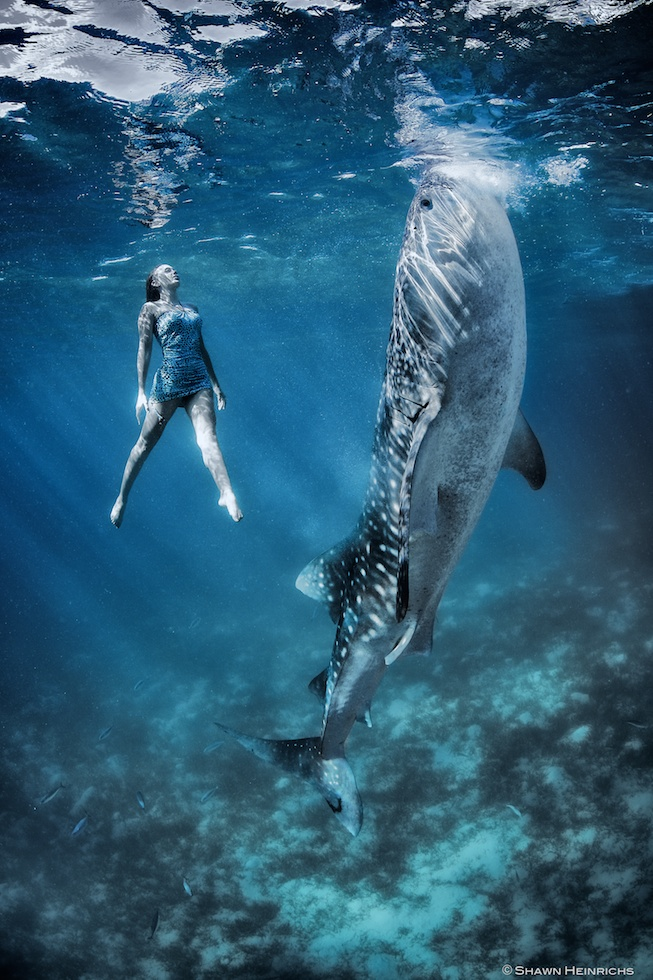 Models Swim and Pose with Whale Sharks (24)