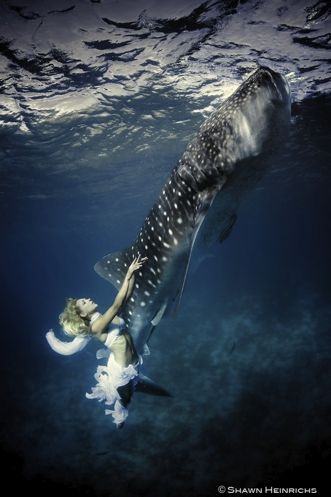 Models Swim and Pose with Whale Sharks (25)