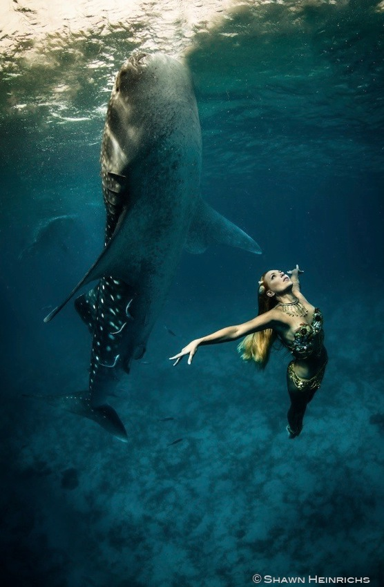 Models Swim and Pose with Whale Sharks (26)