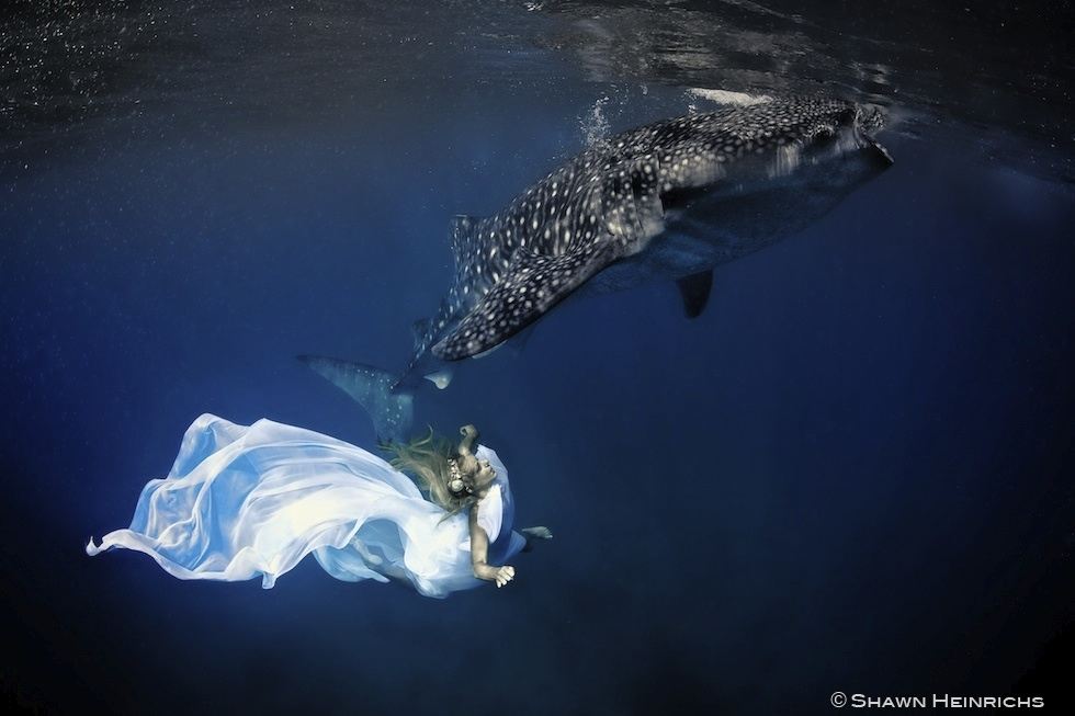 Models Swim and Pose with Whale Sharks (27)