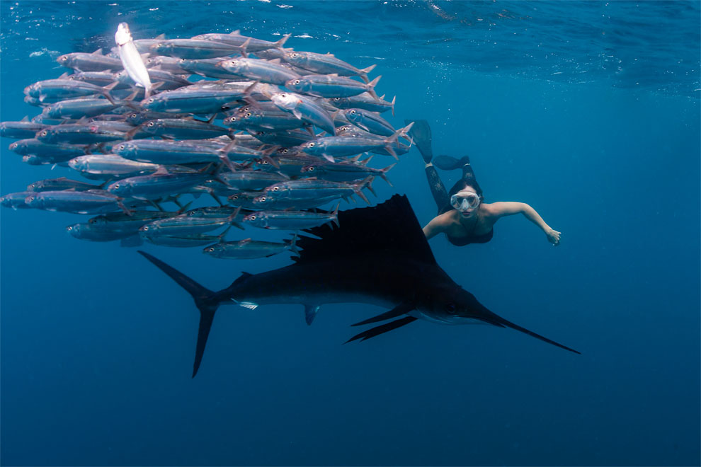 Models Swim and Pose with Whale Sharks (3)