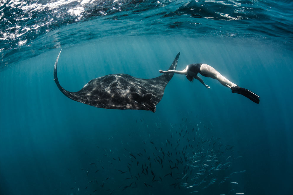 Models Swim and Pose with Whale Sharks (5)