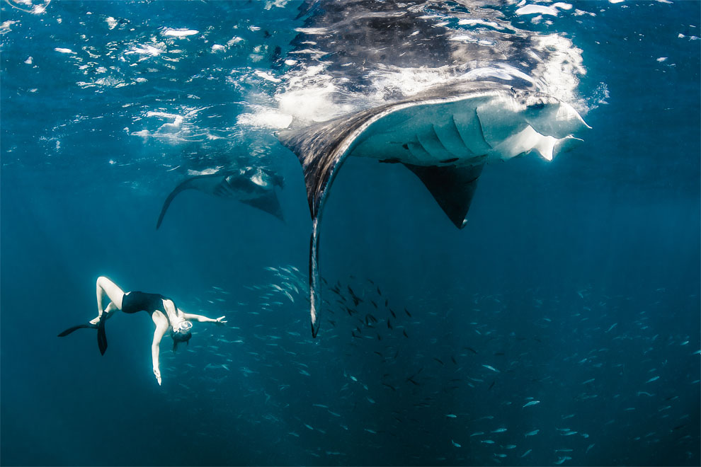 Models Swim and Pose with Whale Sharks (6)