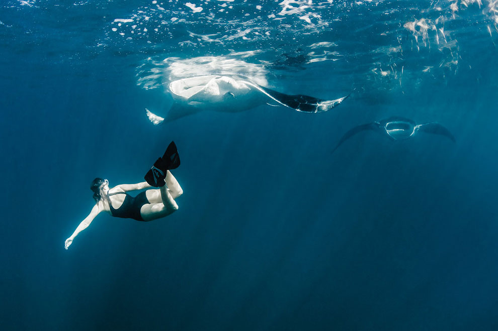 Models Swim and Pose with Whale Sharks (7)