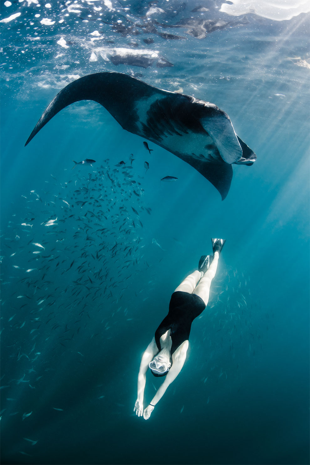 Models Swim and Pose with Whale Sharks (8)
