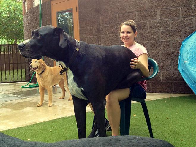 Big Lap Dog (10)