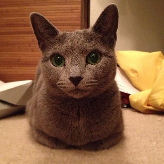 Catloaf (10)