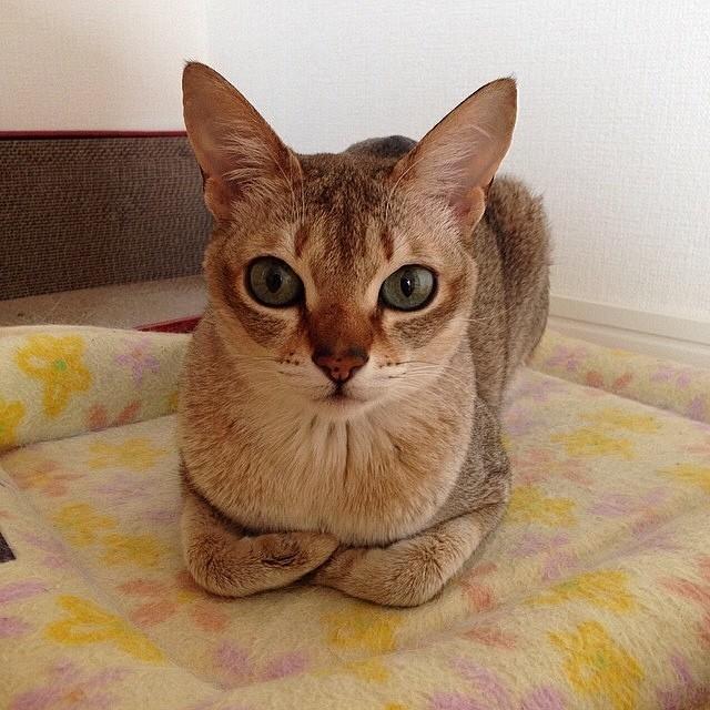 Catloaf (12)
